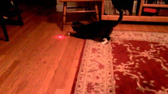 pointeur laser chat