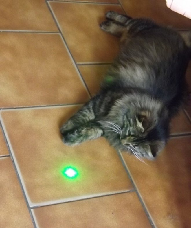 1mw laser pour chat